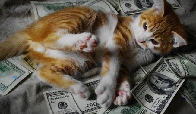 scholarship cat