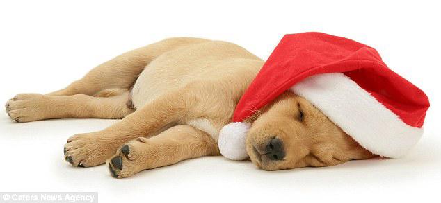 xmas-puppy